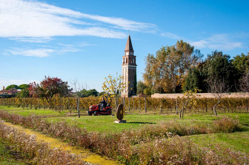 Winnica na Mazzorbo - zielonej wysepce połączonej mostem z Burano